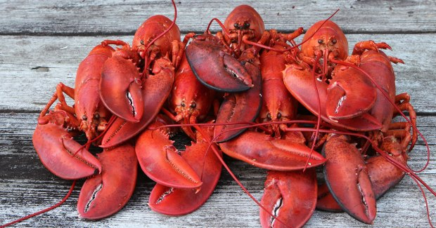 lobster_pile
